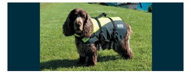 Dog lifejackets