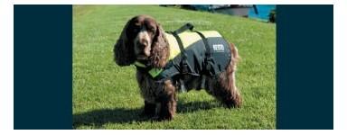 Спасательный жилеты для собак