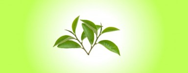 Белый чай серия