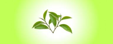 White Tea Serie